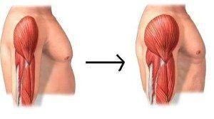 aumento masa muscular